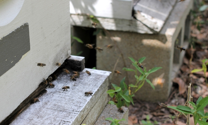 What You Can Learn from the Beehive Entrance