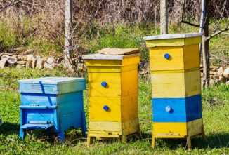 Why Honey Bees Dying in the Hive Should Be Investigated