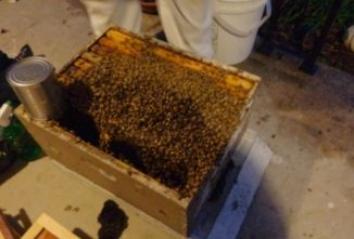 The Ins and Outs of Buying Bees