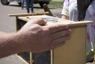 Starting Beekeeping: Find a Beekeeping Mentor