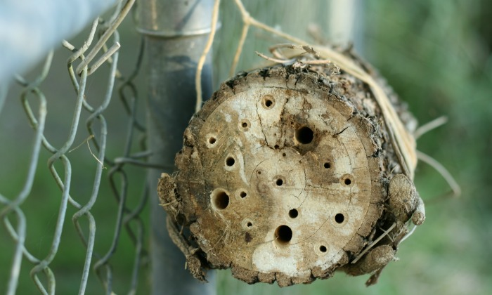 The Basics of Making a Bee Hotel