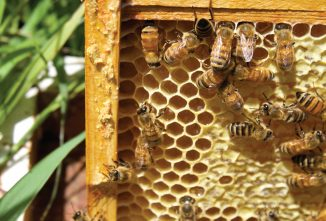 Propolis: Bee Glue that Heals