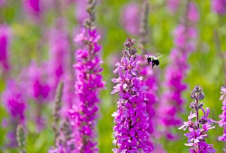 A List of Plants That Attract Bees