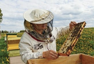 Supering up for a Honey of a Summer