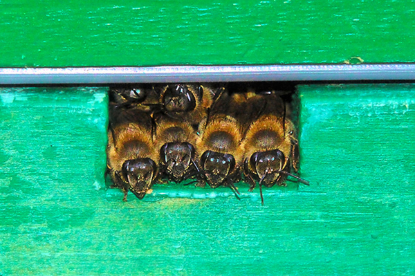 Movements of the Winter Bee Cluster