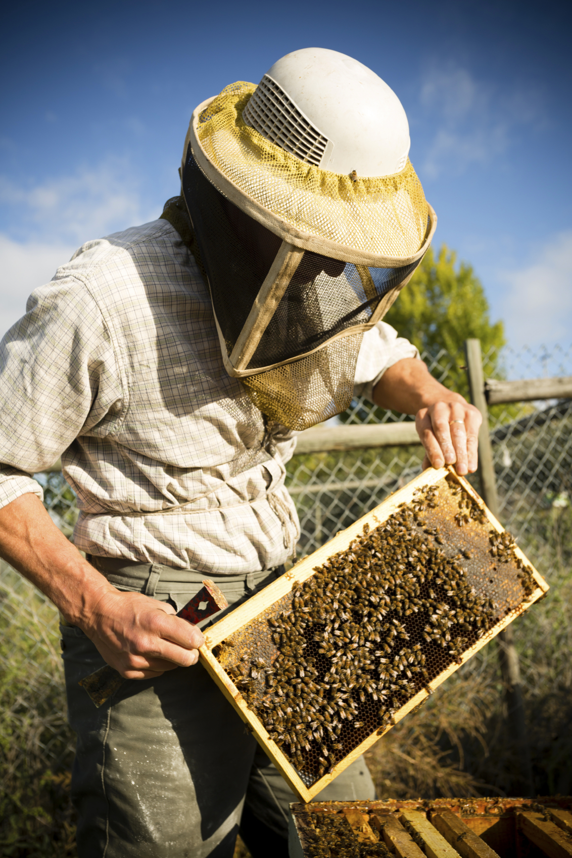 How Disease Can Cause Bee Population Decline