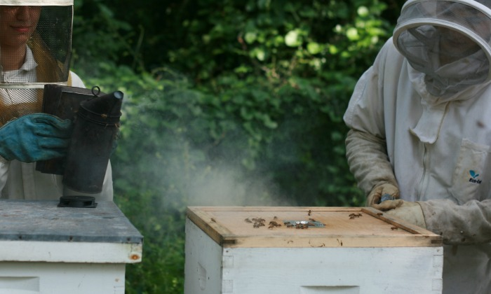 11 Must-Have Beekeeping Supplies for Beginners