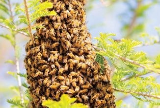 Let's Talk About Losing Bees