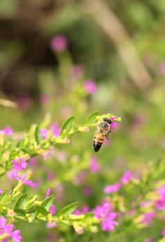 best-plants-for-bees