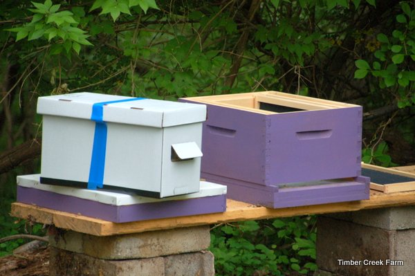 how to keep honey bees