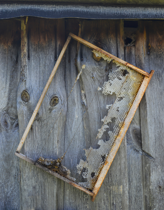 Old honeycomb frame hangs on the wooden barn wall