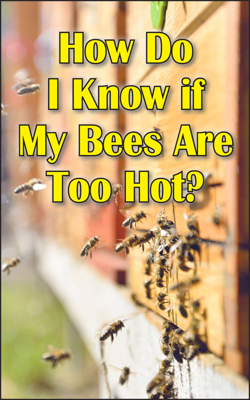 Bees Too Hot