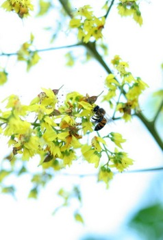 planting-flowers-that-attract-bees