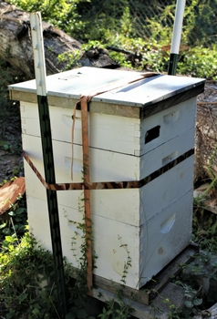 how-to-help-bees
