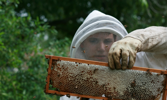 beehive-inspection-checklist