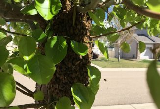 What Does a Caught Swarm Need to Thrive?