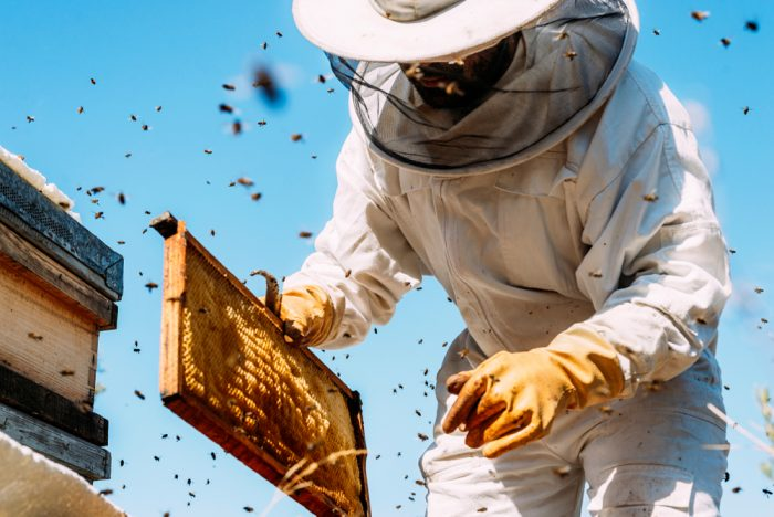 Are Russian Honey Bees More Resistant to Varroa and Tracheal Mites?