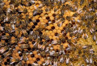 How Many Frames of Capped Brood is Optimum in a Double Deep During Summer?