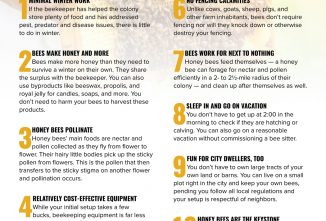 Top 10 Reasons to Become a Beekeeper