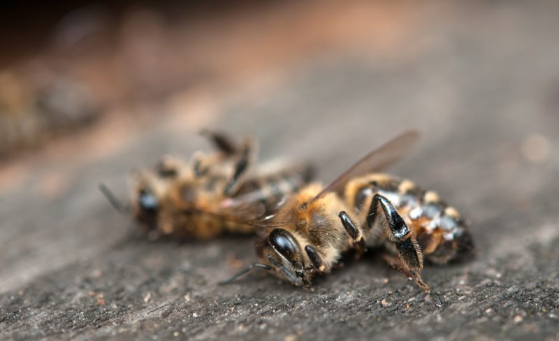 Were My Bees Poisoned?