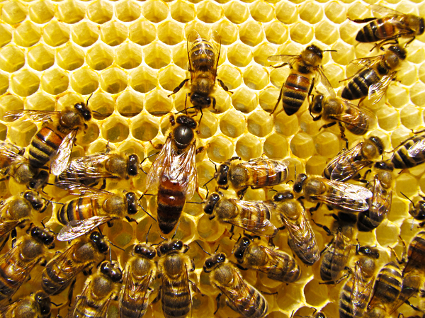 Can You Keep a Queen from Leaving with a Swarm?