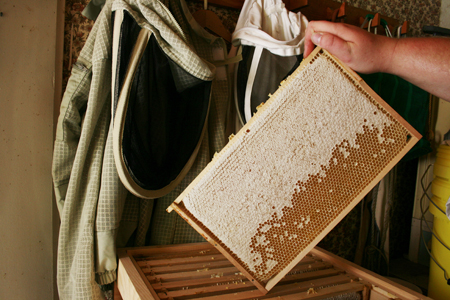 Can I Feed Frames of Honey Back to My Colony?