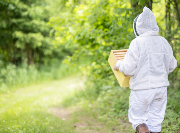 Can I Raise Bees on Forest Land?