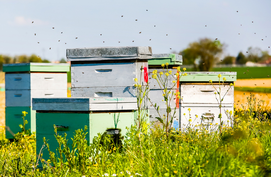 Moisture Control in The Hives: A Four-Season Approach