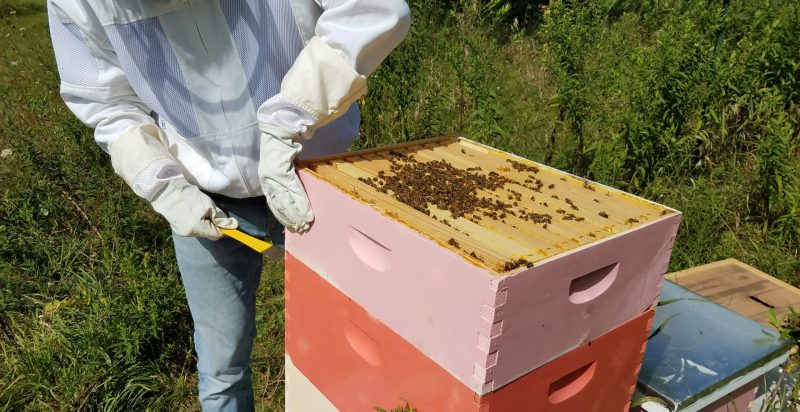 Should I Perform Beehive Inspections with Supers On?
