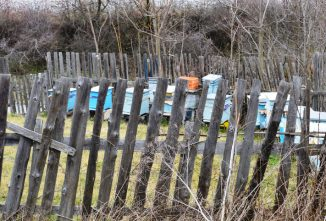 Can Beehives Open Toward a Fence?
