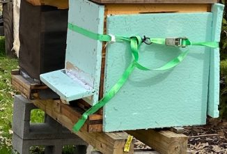 Why Are There So Many Bee Droppings on the Outside of my Hives?