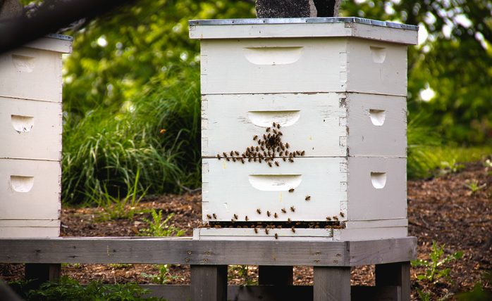 Reversing Brood Boxes in the Spring — Is it Necessary?