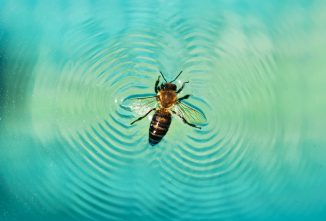 How Do I Keep Bees Away from My Pool?