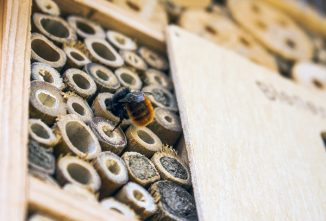 What's Bothering My Mason Bees?