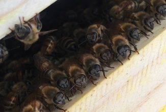 Learn How Bees Can Be Sustainably Managed