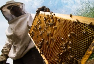 Can I Check Honey Supers While Treating with Formic Pro Mite Treatment?
