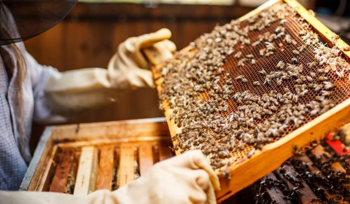 How Do I Combine Two Double-Deep Hives?