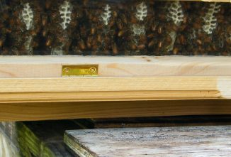 How Wide Should an Entrance Tube of an Observation Hive Be?