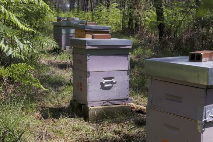Can a Coniferous Forest Support Honey Bees?