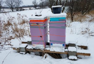 Beehive Wraps for the Winter
