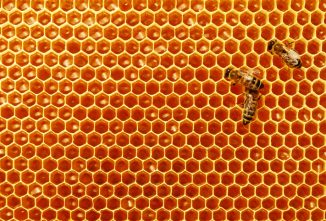 When and How to Store Honeycomb and Brood Comb